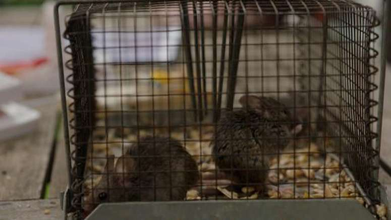 Millions of mice are swarming Australian towns. Now there's a plan to end the plague with poison