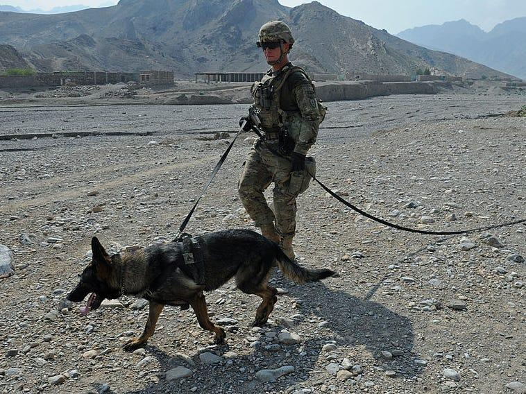 Pentagon denies, criticizes viral reports that US left service dogs in Afghanistan